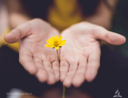 open hands with yellow flower